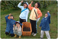 山ぶどう収穫体験(季節限定)