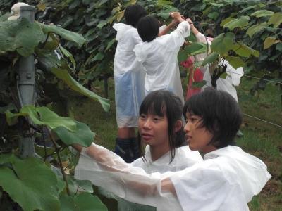 森のこだま館 盛岡市大宮中学校 職場体験