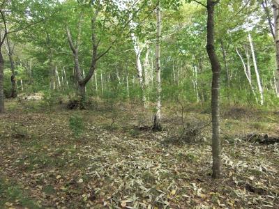 森のこだま館 四季 秋