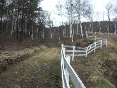 森のこだま館 ランチバイキング