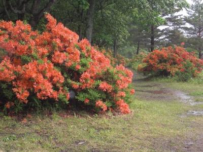 森のこだま館 四季 県立自然公園