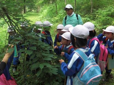 森のこだま館 葛巻町立五日市小学校 森の体験