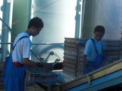 森のこだま館 葛巻中学校 くずまきワイン職場体験