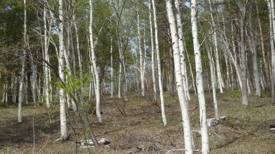 森のこだま館 四季 春