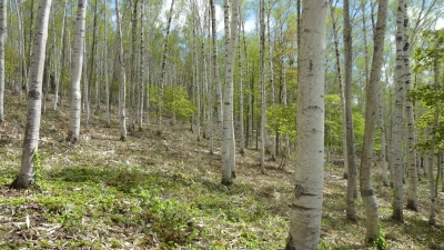 森のこだま館 四季
