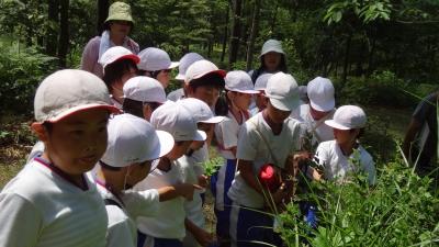 森のこだま館 五日市小学校 学校林活動