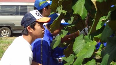 森のこだま館 盛岡市大宮中学校 やまぶどう剪定体験