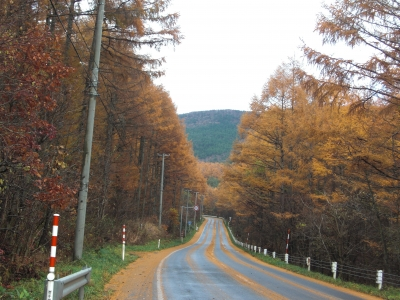 森のこだま館 四季 紅葉