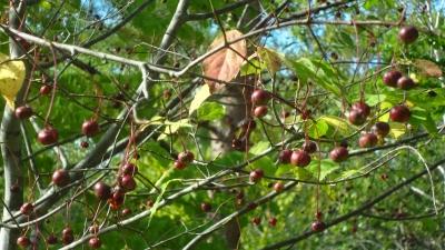森のこだま館 紅葉
