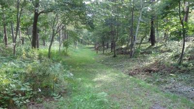 森のこだま館 四季 塩の道散歩